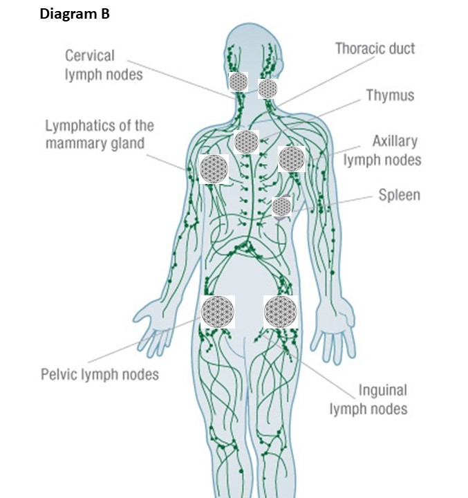 Re-balancing Emotions through the Lymphatic System - Full ...
